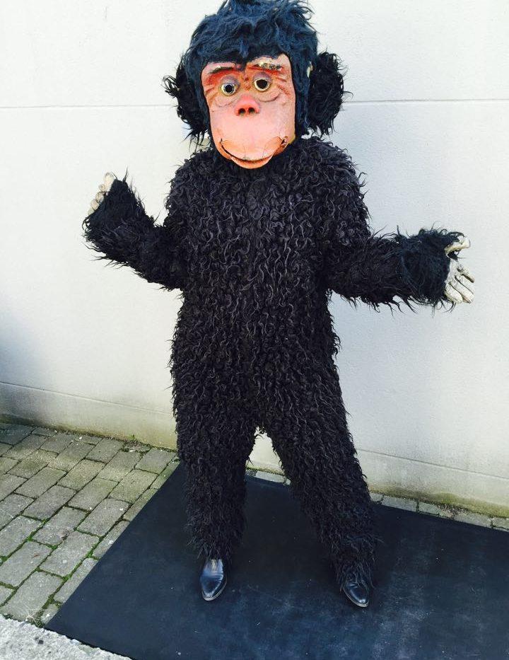 chimmpanse